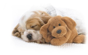 cute-wallpapers-wallpaper-animals-wallpapers-puppy-sleeping-cute-puppies-wallpaper-41287