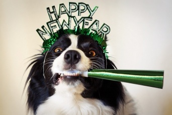 new-years-dog